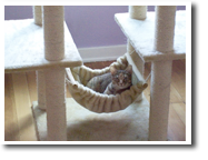 The Best Little Cat House In Los Angeles Luxury Cage